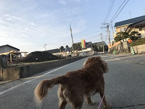 H30年1月20日ブログ-2.JPG