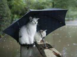 雨猫.jpg